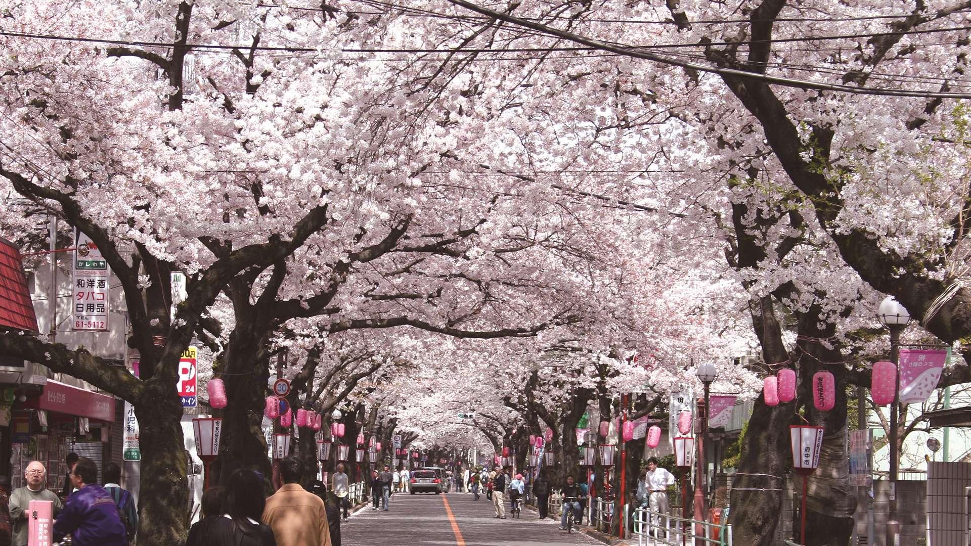 Tokyo's Top 7 HIDDEN Historical Areas