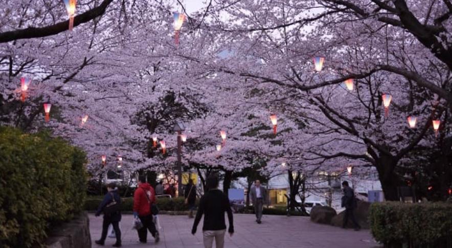 5 HIDDEN Cherry Blossom Viewing Spots in Tokyo 2020